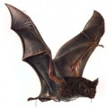 vampire bat from world book